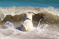 Vés a: Les platges catalanes on podem anar amb el nostre gos