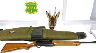 Vés a: Els Agents Rurals denuncien dos caçadors furtius de cabirol al Solsonès