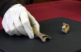 Vés a: Descobreixen l'infant neandertal més antic de Catalunya