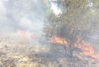 Un incendi crema una petita àrea de vegetació al nucli urbà del Milà