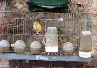 Agents Rurals actuen contra la captura furtiva d'ocells a l'Alt Camp
