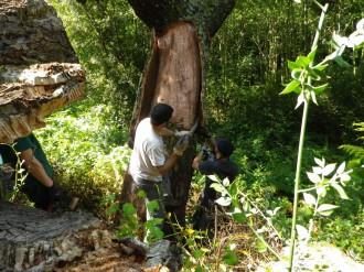 Vés a: El CFC organitza un curs de pelador de suro a Santa Coloma de Farners