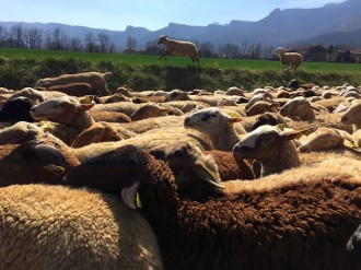 Vés a: Els pastors catalans es queixen al conseller Pelegrí