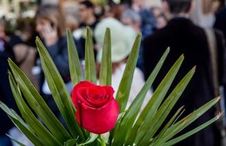 El Gremi de Floristes calcula que s'ha venut un 7% més de roses que l'any anterior