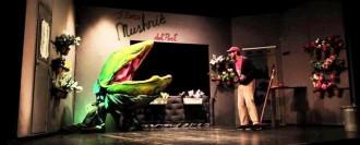 Teatre:  La botiga dels horrors, a càrrec del Traspunt