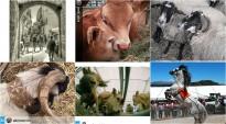 Escollides les 6 fotografies finalistes del concurs Instagram de la Fira de Sant Isidre