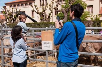 El Coll presenta les millors vaques a la Fira de Sant Isidre
