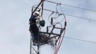 Vés a: Retiren un niu de cotorres d'una línia elèctrica a Santa Coloma de Gramenet