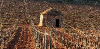 Vés a: Bages Terra de Vins decidida a impulsar el turisme del vi