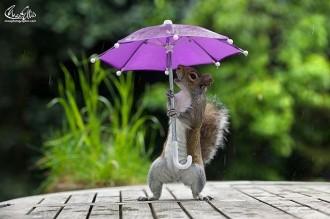 L'esquirol que es refugia de la pluja de Londres sota el paraigua del fotògraf