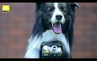 Nikon inventa una càmera que permet als gossos fer fotografies
