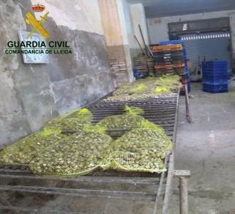 Comissen a Lleida més d'una tona de cargols que es venien il·legalment