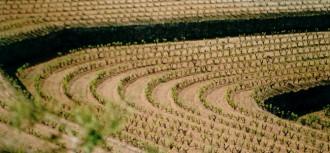 Vés a: Primera edició dels Premis Montsant de vins