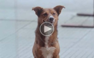 Un vídeo basat en la història de Hachiko commou les xarxes
