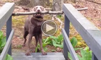 La intel·ligència dels gossos segueix captivant Youtube
