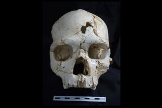 Vés a: Descobreixen proves del primer assassinat de la història a Atapuerca