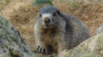 Vés a: El dia de la marmota amb el CREAF