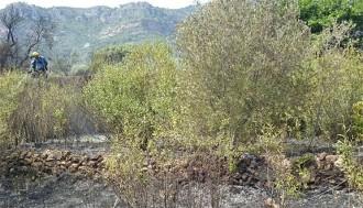 Cremen 2.000 metres quadrats de vegetació a l'altura d'Alforja