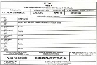 Vés a: El Síndic denuncia la fitxa d'un cavall anomenat «Catalán de mierda»