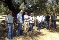 Vés a: L'olivera més vella de l'estat es troba a Ulldecona, segons un estudi