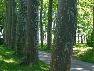 Girona acull el 6 de juny l'assemblea del Consorci Forestal