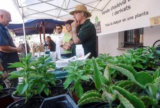 Vés a: La Fira d'herbes remeieres omple la plaça de Vilanova de Sau d'olors i colors