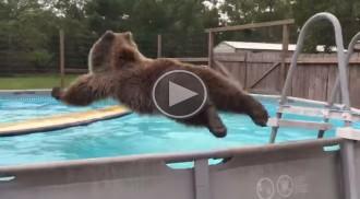 El salt d'un ós en una piscina que ha fet riure més d'un milió de persones