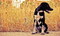Consells per a fer més fàcils els dies calorosos als nostres animals domèstics