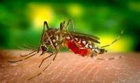 Els remeis casolans per combatre les picades de mosquit
