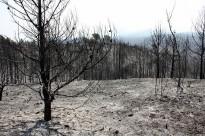 Vés a: L'incendi d'Òdena, estabilitzat