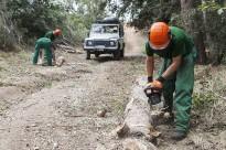 Vés a: Solsona acollirà el Congrés Europeu de Formació Forestal