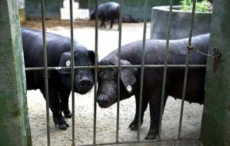 Un zoo de la Xina monitoritza els animals per detectar terratrèmols