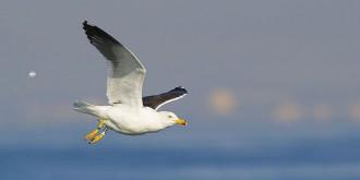 Fins a noranta-dues espècies d'aus diferents conviuen al Port de Tarragona