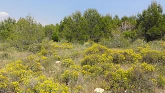Vés a: Els terrenys degradats restaurats amb fangs de depuradora segresten fins un 37% més de carboni