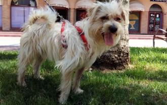 Final feliç per la història d'un gos maltractat a Calafell