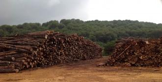 Vés a: Subvencionen 49 projectes de biomassa a la Xarxa de Parcs Naturals
