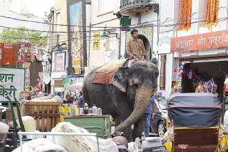 Un elefant al centre Terrassa