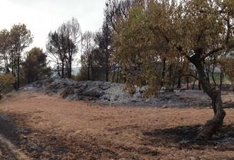 Els Bombers donen per extingit l'incendi d'Òdena