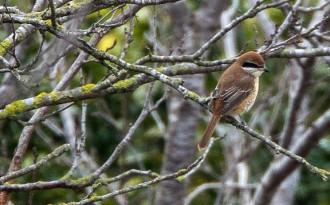 Vés a: Augmenta el nombre d'espècies i exemplars d'aus al Delta de l'Ebre