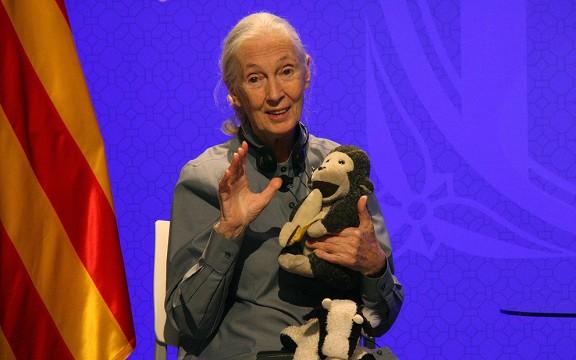 Vés a: Jane Goodall: «Els catalans han liderat l'esforç de reconèixer que els animals tenen emocions»