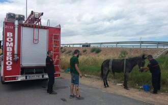 Dos mil quilòmetres per acollir una mula de quaranta anys