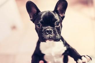 Els restaurants de Barcelona on pots entrar amb gos