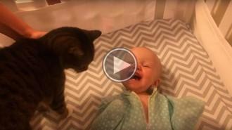 La divertida emoció d'un nadó en veure un gat per primer cop
