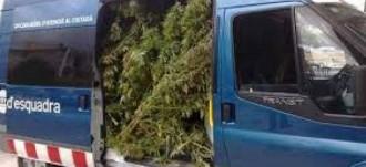 Vés a: El sindicat de Mossos USPAC denuncia la manca d'espai per guardar la marihuana requisada