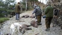 Vés a: Reclamen transparència quant al nombre de víctimes humanes per la caça a Catalunya