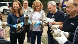 Alliberen més de 200 tortugues mediterrànies al Parc natural de Montsant