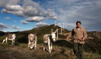Vés a: EolicCat insta els polítics catalans a reactivar el sector eòlic