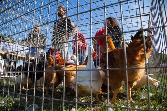 La Fira de l'Hostal del Vilar torna a reunir els pagesos i els ramaders del Lluçanès