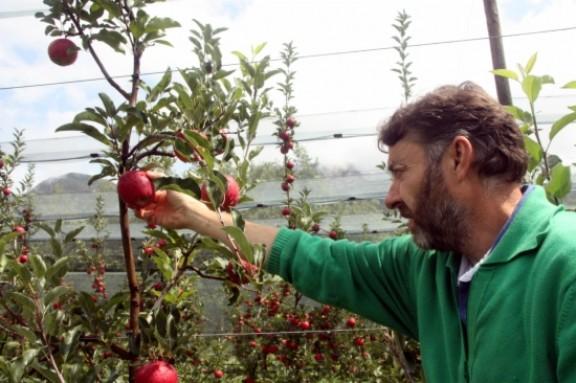 La collita de poma ecològica de muntanya al Solsonès preveu arribar a les cent tones