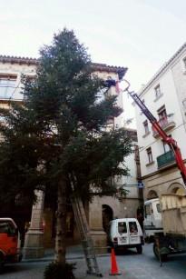 Vés a: Solsona demana col·laboració per trobar un arbre de Nadal